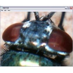 Mikroskop: Aufnahme eines Fliegenauges.