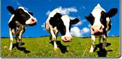 Balanza para animales (veterinarios)