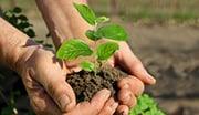 Medidor de pH para la agricultura