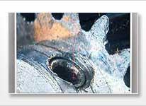 Wasserfloh im Mikroskop
