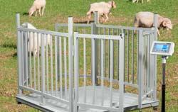 Geeichte Tierwaage für größere Nutztiere z.B. Schafe.