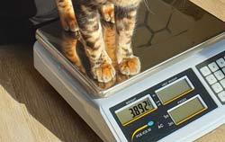 Katze wird mittels einer Tierwaage zur Gewichtskontrolle gewogen.